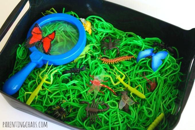 insect sensory bin