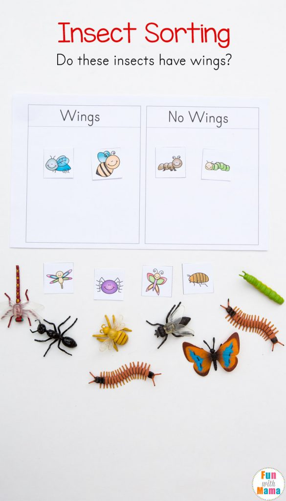 insect sorting activity