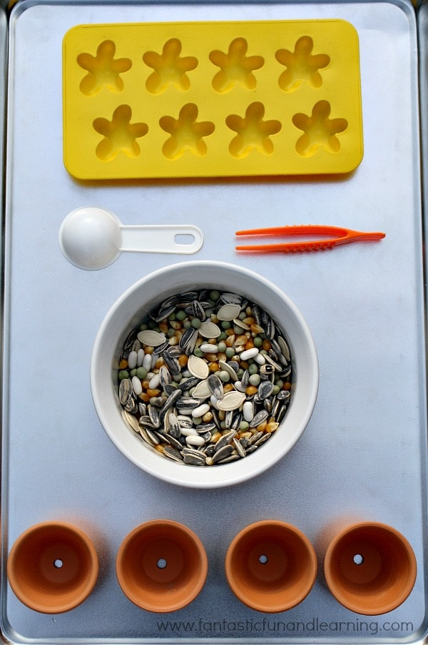 seed sorting activity